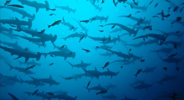 a variety of sharks swimming in water