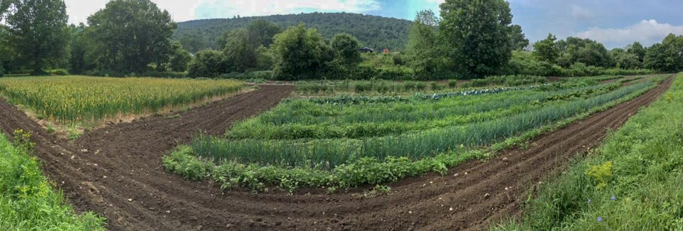 panoramic view of crop fields at Engelbert farms new york