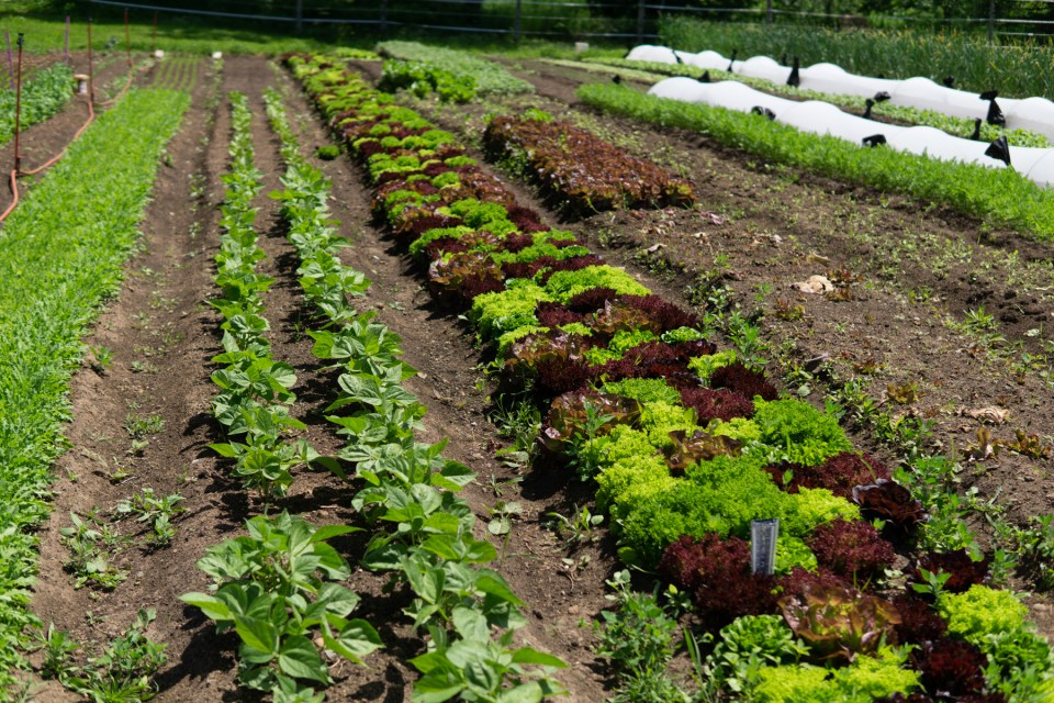 colorful crop fields and cherkerboard lettuce rows grow in soil at UProoted