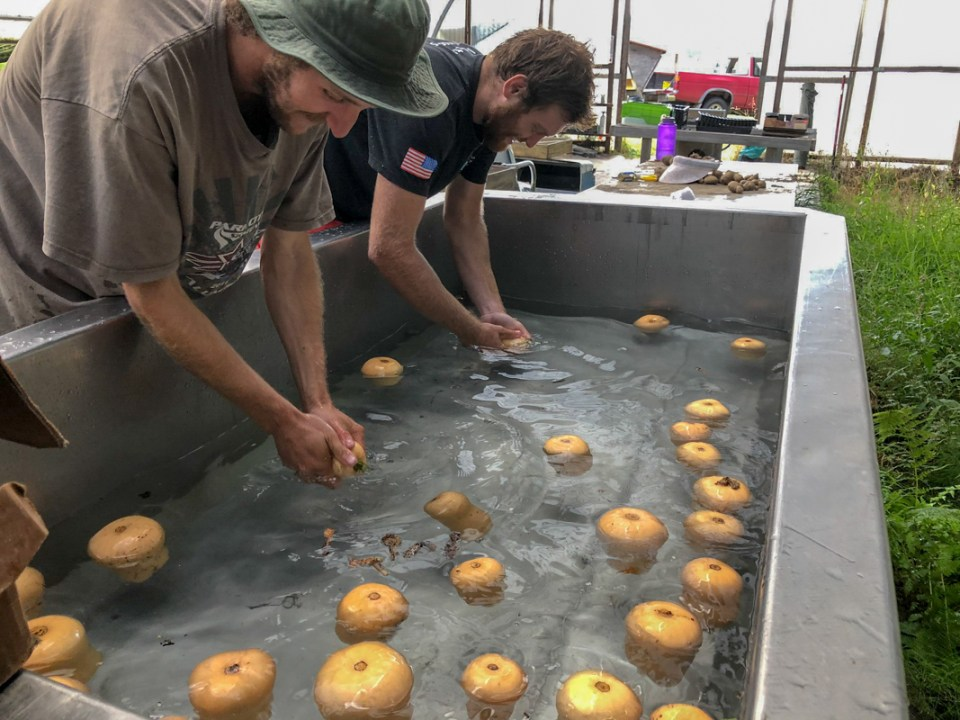 Ralf and Forrest wash vegetables at Flynn Farms in Washington