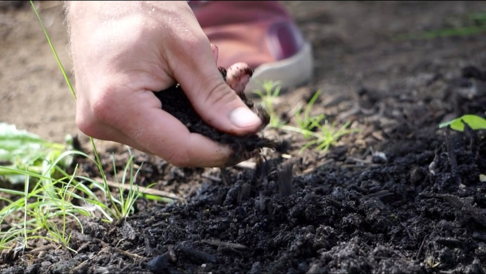 soil close-up at organic skokomish valley farms