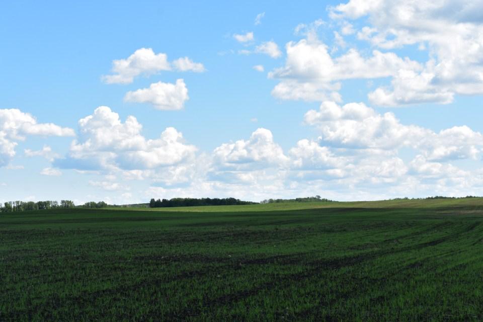 farm fields at legend organic, a nature's path grain farm