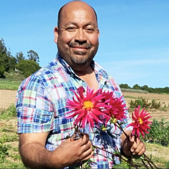 California farmer Javier Zamora poses with gerber daisies