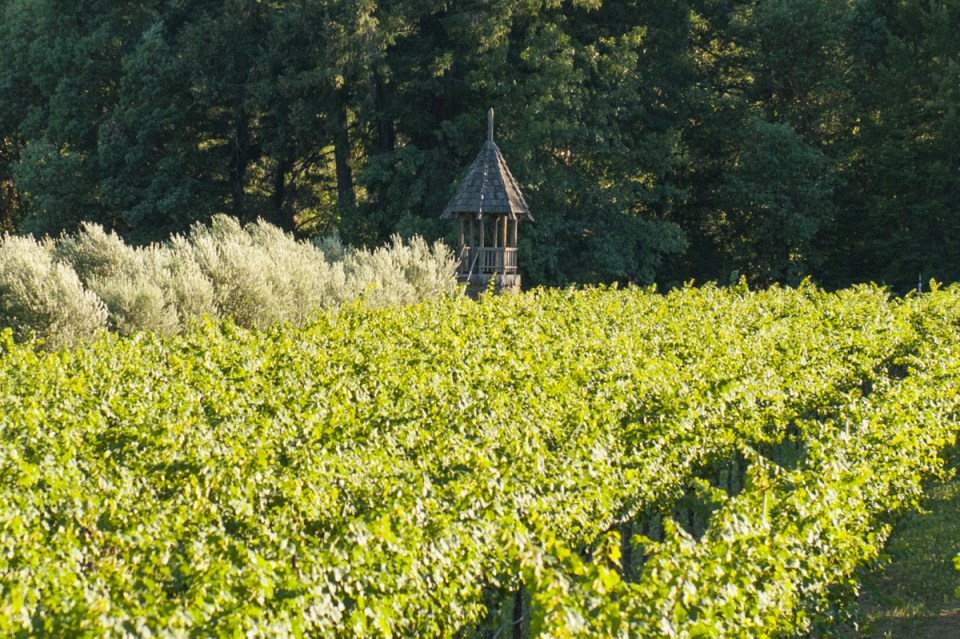 vineyard rows and rustic tower