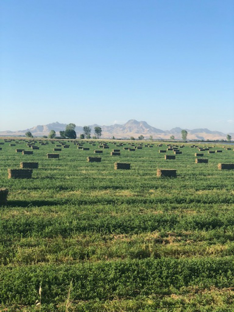 Hay fields with mountain range backdrop