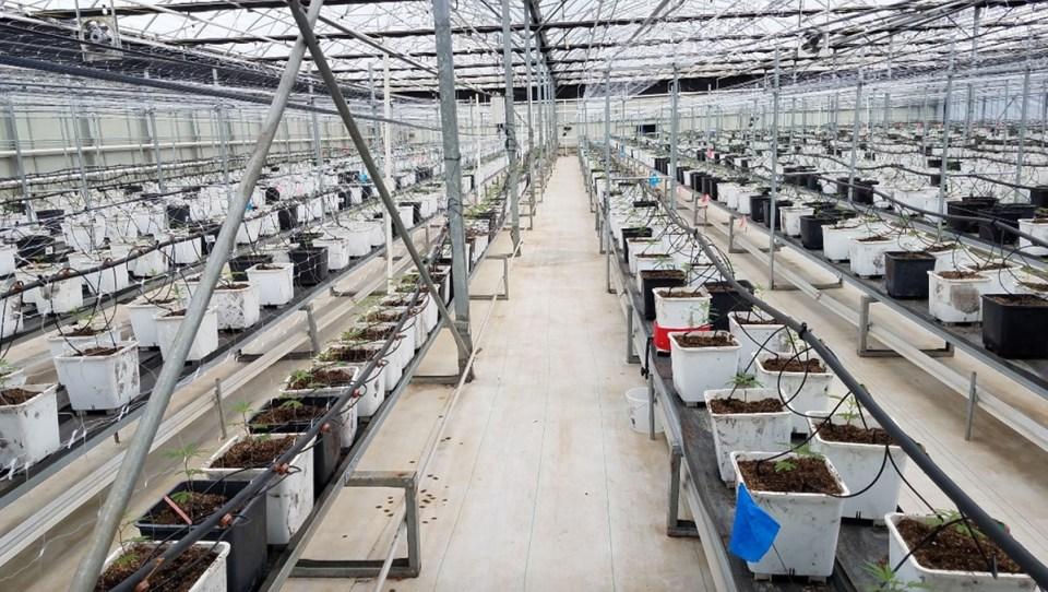A fullscale house for hydroponic marijuana production.