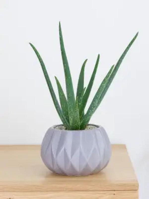 Aloe Vera Purity Ceramic