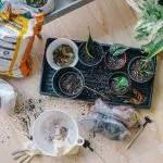 Winter Gardening Tips: 6 Ways To Prepare Your Garden For The Colder Months