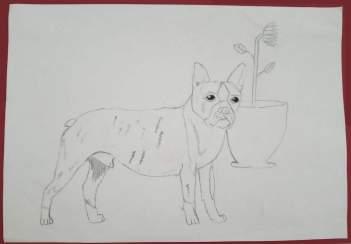 Künstlerin-des-Monats-Tiere-2