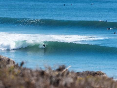 Tarantulas surfer