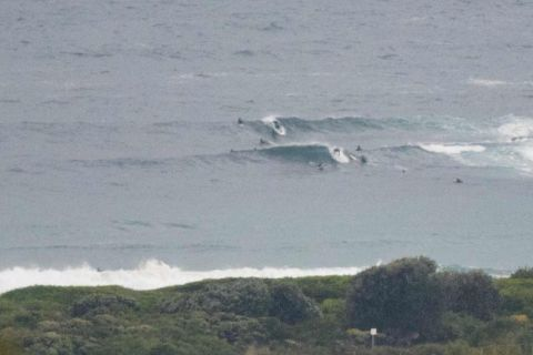 dy surfing