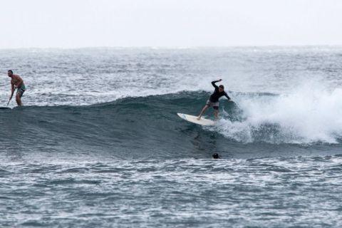 fairy bower surfer