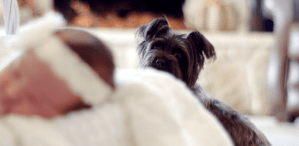 When Dog and Baby Meet: How to Prepare Your Family