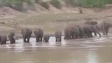 Out of gariaband, Herd of 17 elephants, Magarloads of reached Dhamtari,