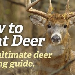 Whitetail Deer Shot Placement Diagram Wiring Diagrams Lighting Circuits Australia The Best Scent Strategies For Rut Hunting Realtree Camo Https Www Com How