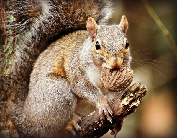 5 Reasons Squirrel Hunting is So Popular