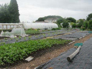 Beds, polytunnels and woodchip paths