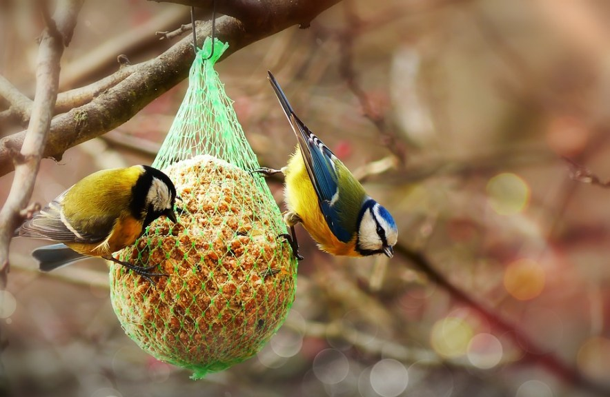 diy bird food