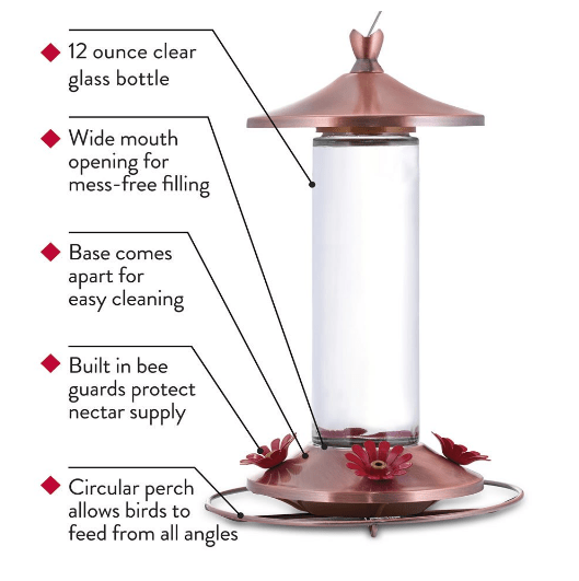 humming bird feeder infographics
