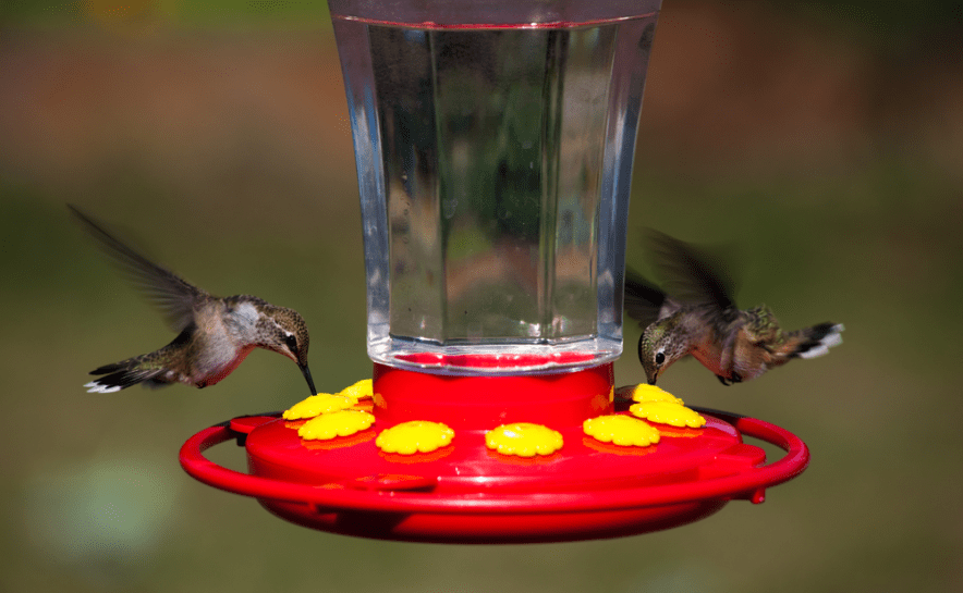 hummingbeard feeder