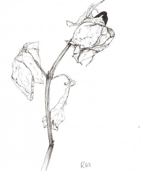 'Still Life' drawings