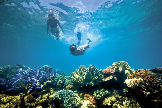 Snorkelling in the Great Barrier Reef