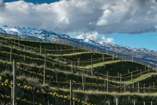 Domaine Thompson vineyard