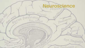 Neuroscience Header