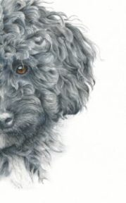 paint curly haired poodle