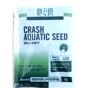 Hemianthus callitrichoides Seed B front at Rebel Pets