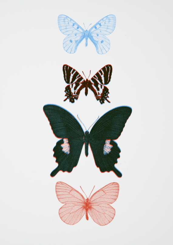 a two colour screen print of butterflies in blue and red