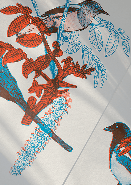 two magpies 2 colour screen print on Fabriano paper. Bird print in Blue and Red inks