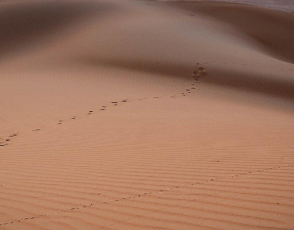 travel wish list footprints