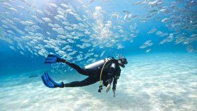Photo of Things to Remember When Looking for Scuba Diving
