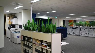 Photo of Best benefits of Office plants Melbourne and why you should go for it today for your workplace
