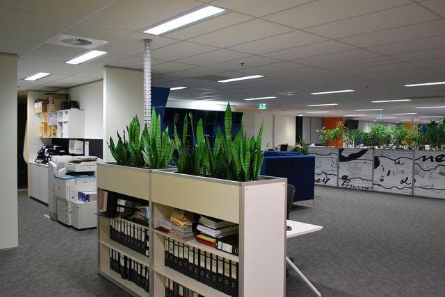 Office Plants Melbourne
