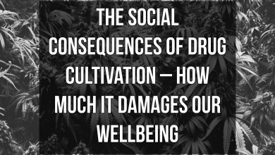 Photo of The social consequences of drug cultivation – how much it damages our wellbeing
