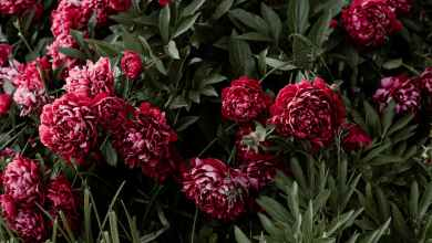 Photo of 5 Flowers To Please Your Loved Ones At On Any Occasion