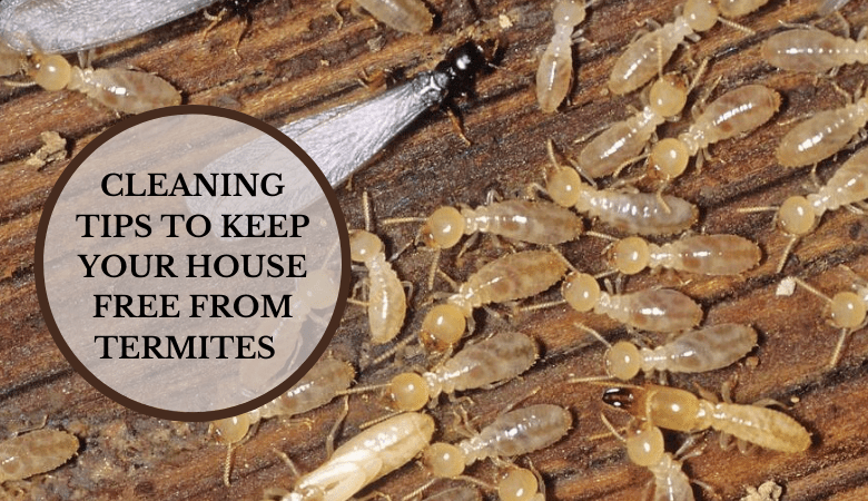 Cleaning Tips to Keep Your House Free From Termites