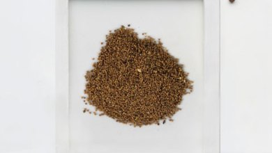Photo of The Benefits of DODDER SEEDS Herbs