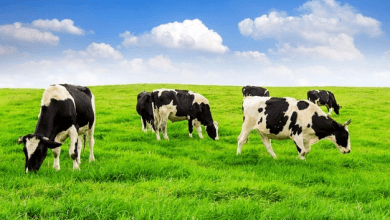 Photo of 5 Healthy & Different Types Of Animal Feed