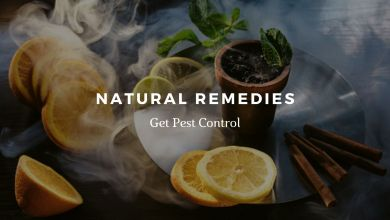 Photo of Natural Remedies for Pest Control