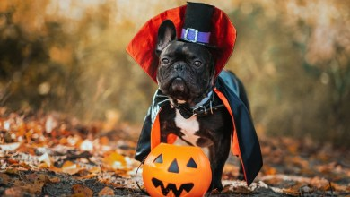 Photo of Wish Your Dog A Happy Halloween!