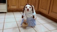 Silly Dog Costumes