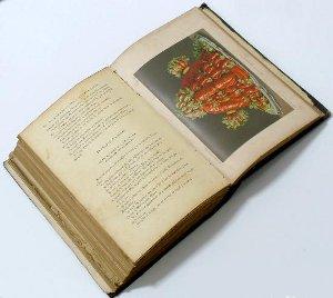 libros-de-cocina-recetas-de-cocina-recetasonline