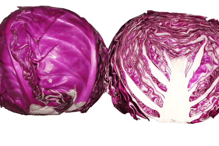 Beneficios y cualidades de la lombarda