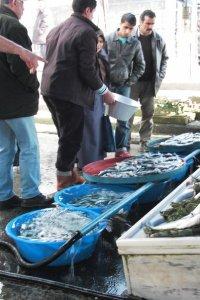 Marché au poisson à Istanbul © Balico & co