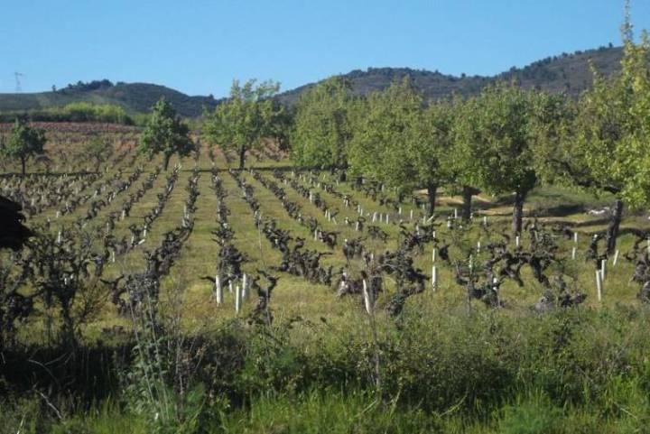 La industria europea del vino podría sufrir con el calentamiento global según reciente informe