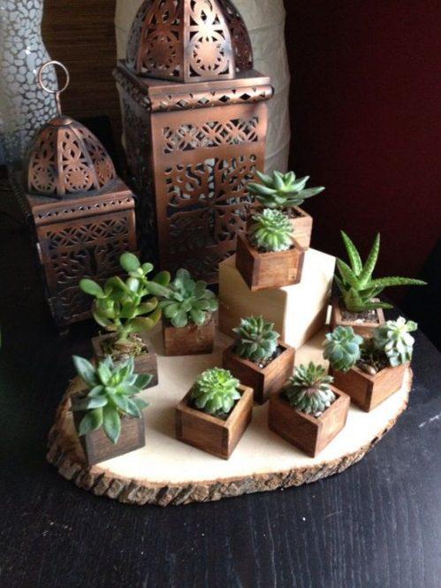 El placer de decorar con suculentas