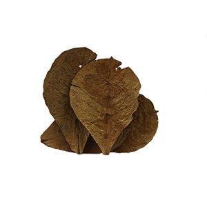 Feuilles de badamier / catappa de la marque Tantora- Taille 18 – 30 cm – Complément alimentaire – Feuilles améliorant la qualité de l'eau – Sachet de 10 feuilles
